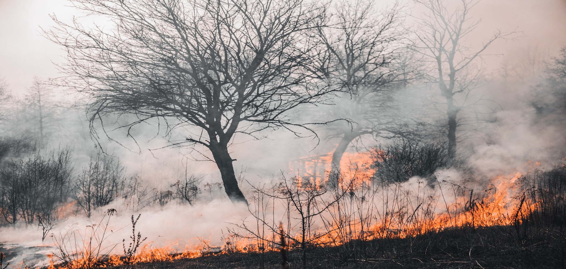 forest-fire-image